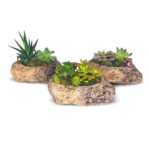 Succulent Rocks