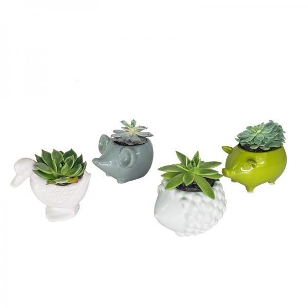 Succulent Animals