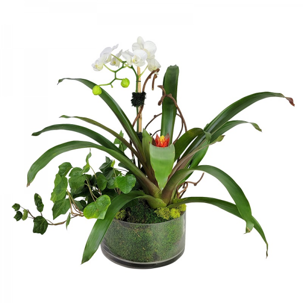 Tropical Orchid Garden in Glass