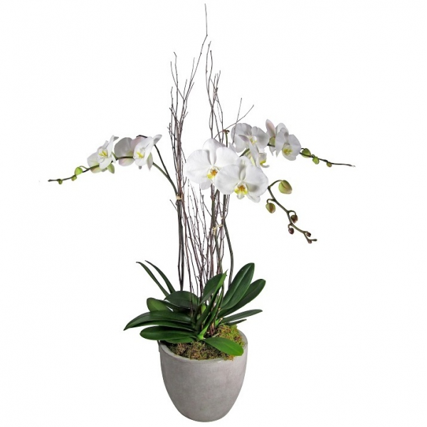 Triple Orchid in Grey Pot
