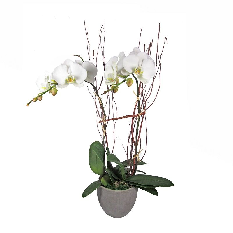 Double Orchid in Gray Pot
