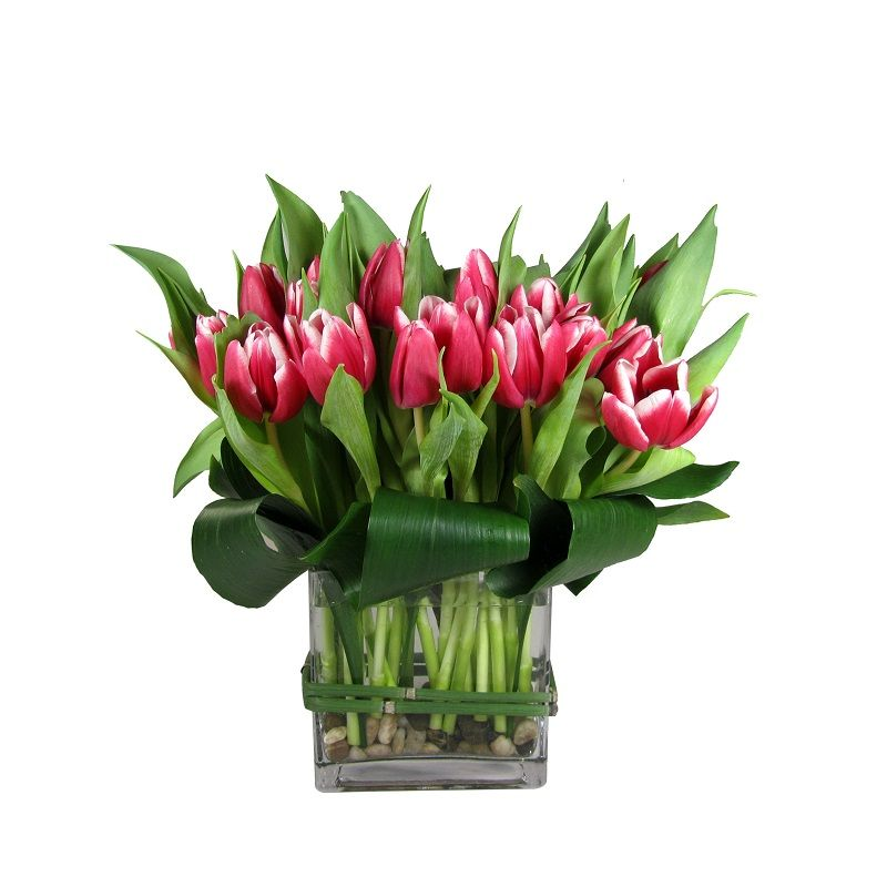 Mad for Tulips
