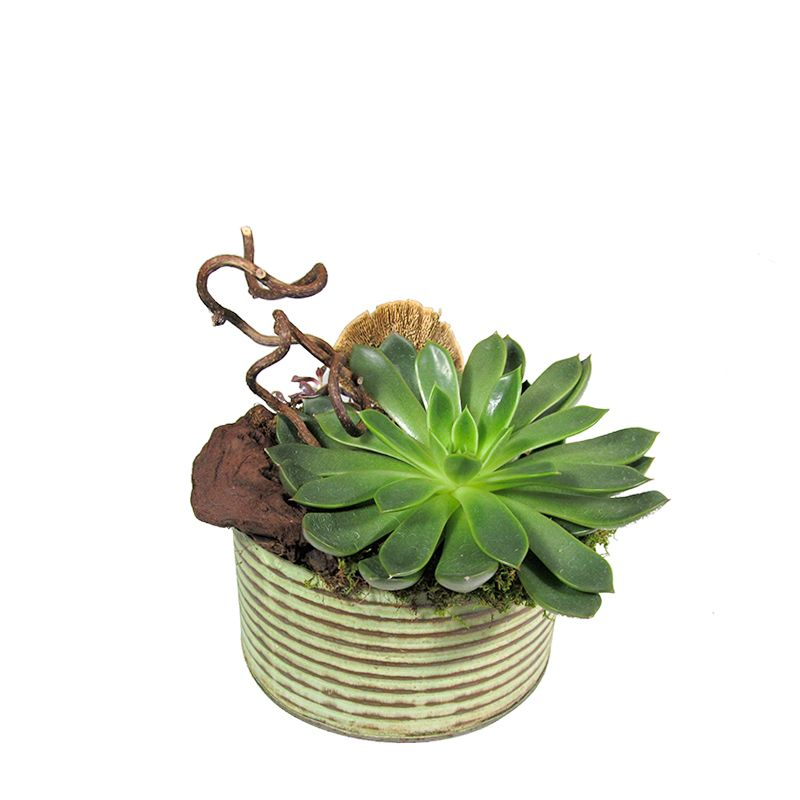 Succulent Can
