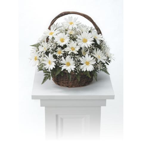 White Daisy Basket Arrangement CTT4-21