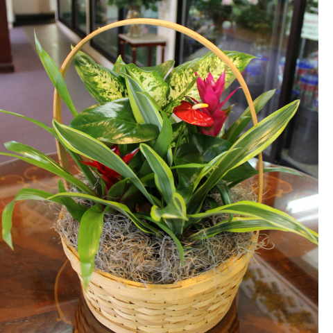 Tropical Basket Garden Medium