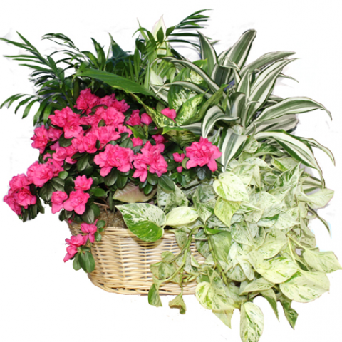 Bountiful Blooming and Green Basket Garden Extra Large