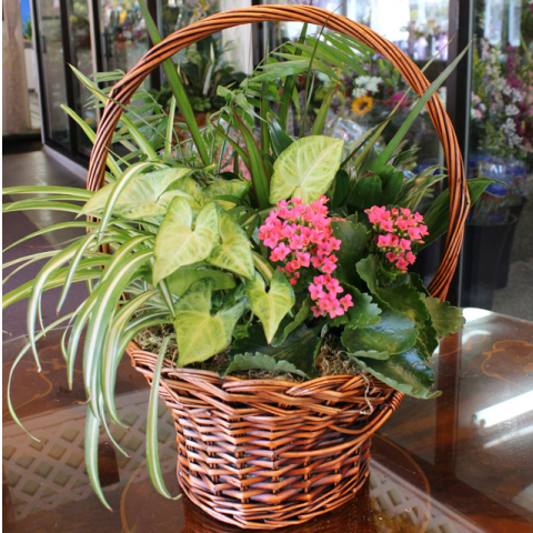Basket Garden with Bloomer