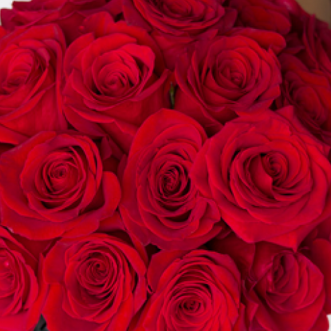 2 Dozen Bunch of Red Roses