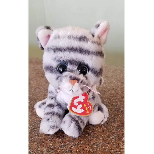 Millie - grey tabby cat
