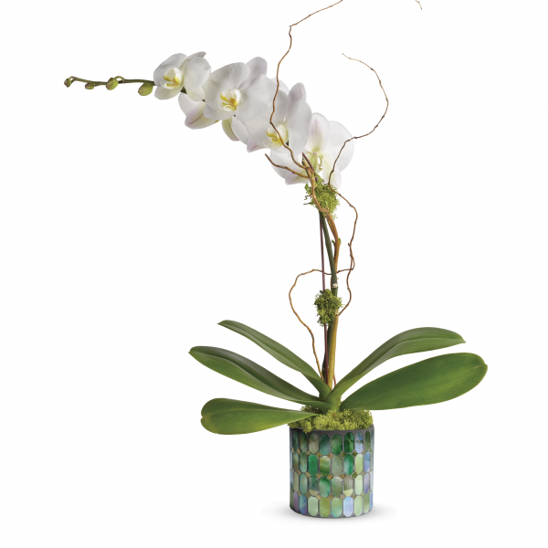 Marvelous Mosaic Orchid Planter