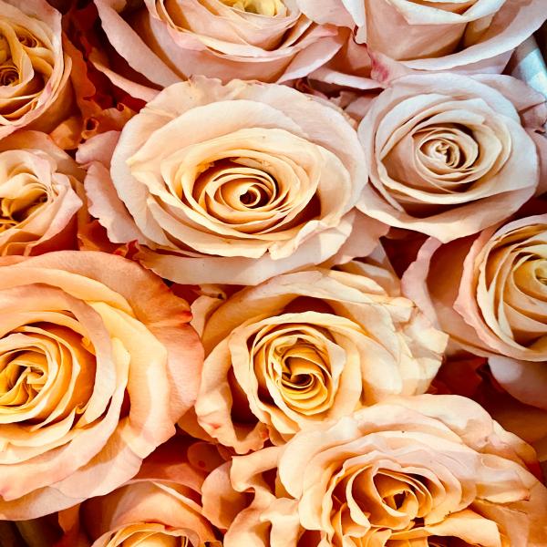 Shimmer roses dozen
