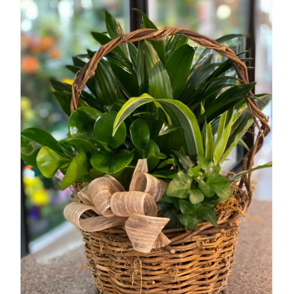 Planter basket medium