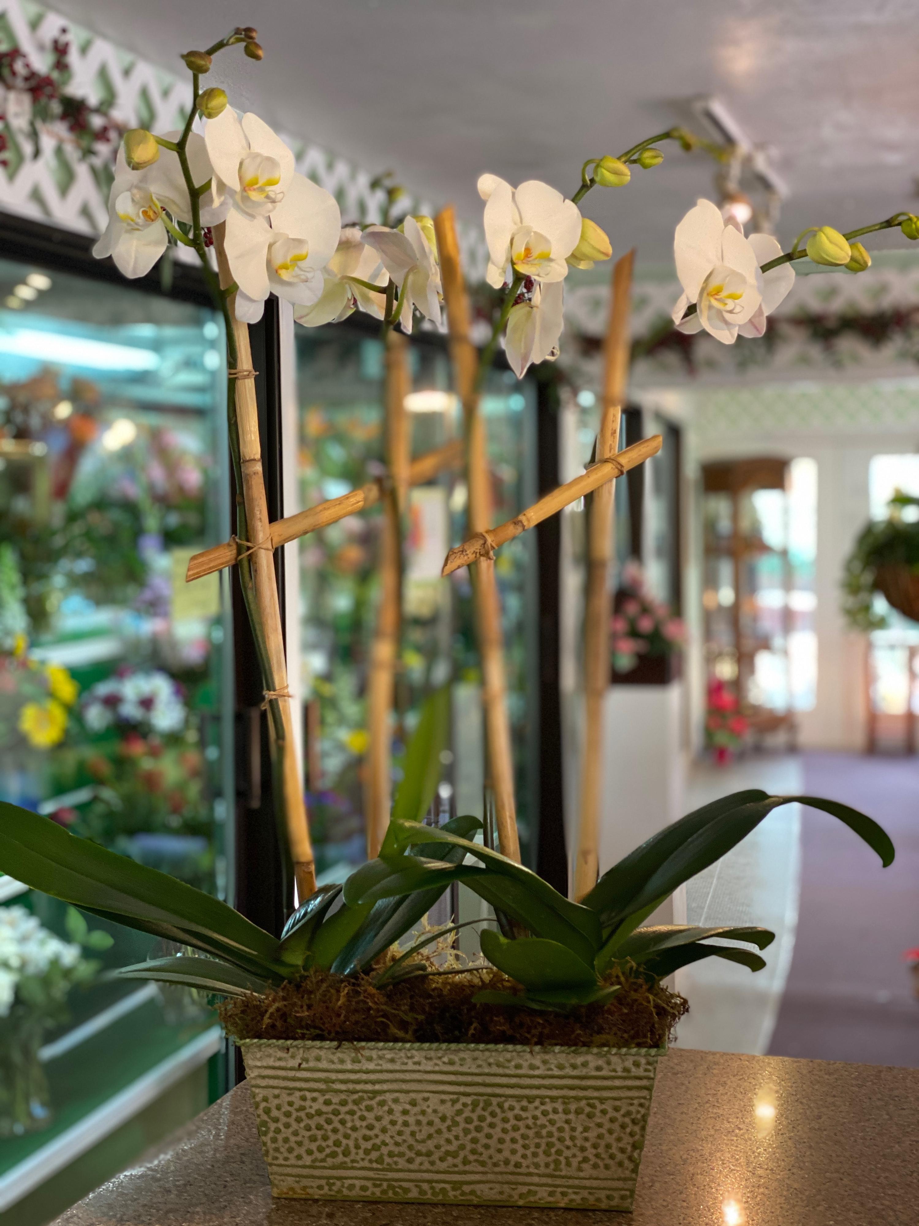 Four Stemmed Orchid Vintage Metal