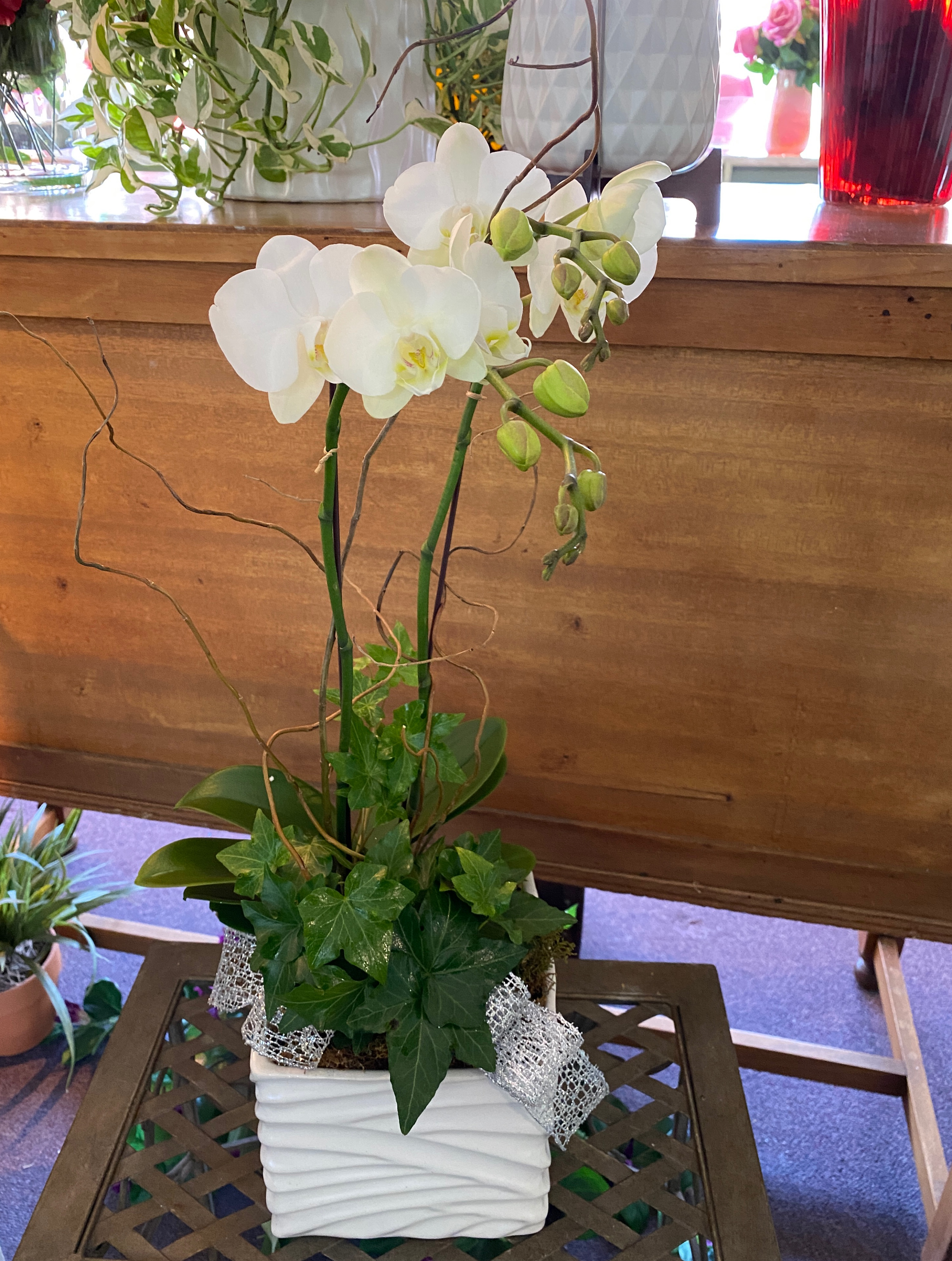 Phalaenopsis mix in white wave container