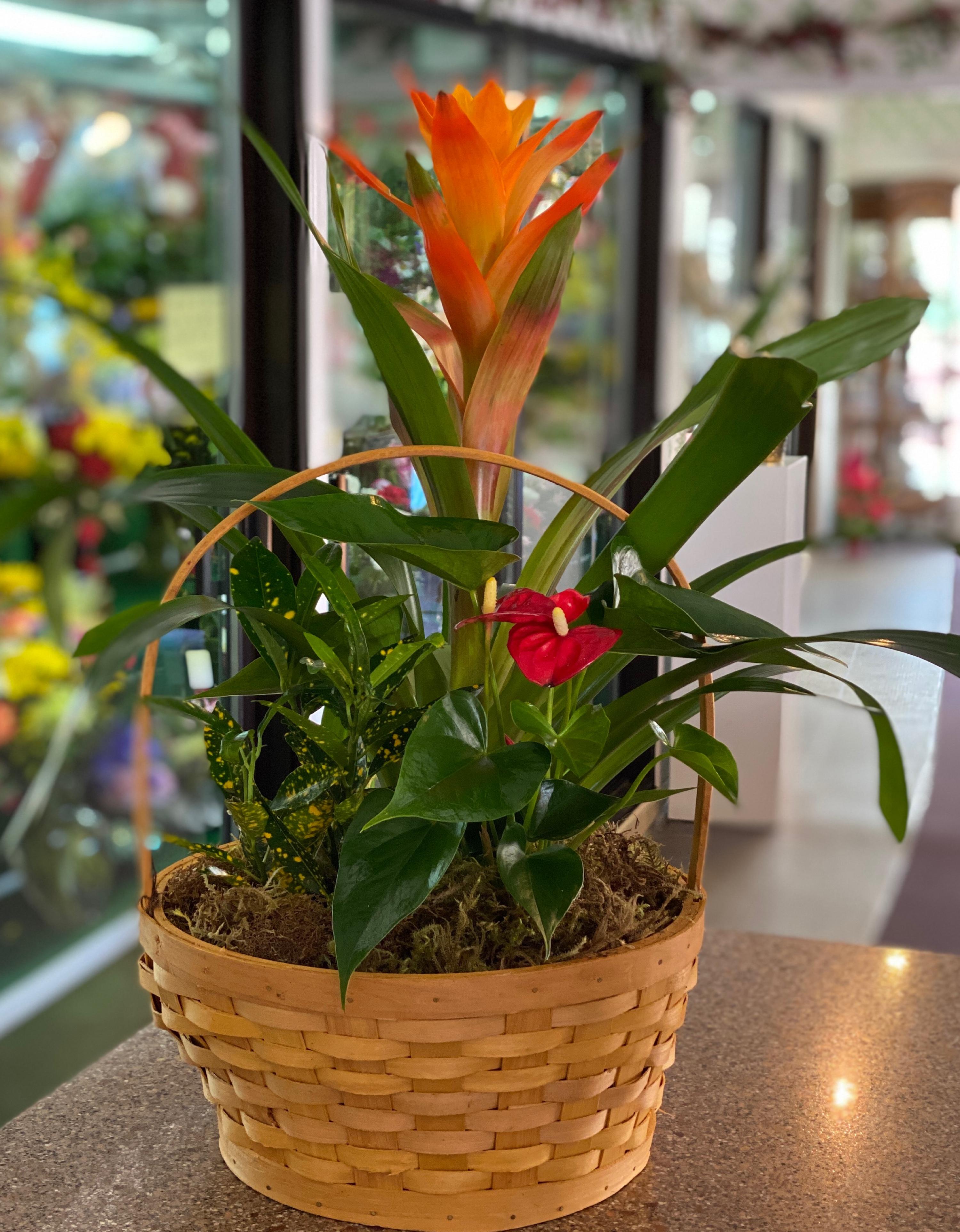 Tropical Anthirium basket medium