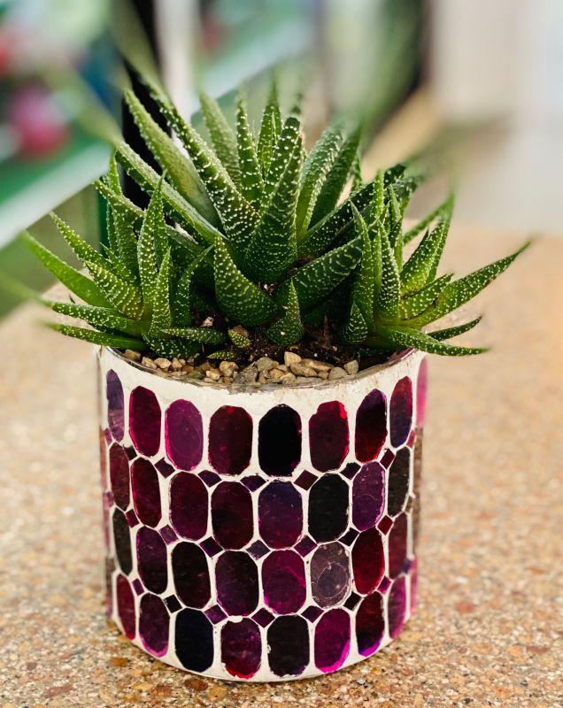 Bedazzled succulent planter