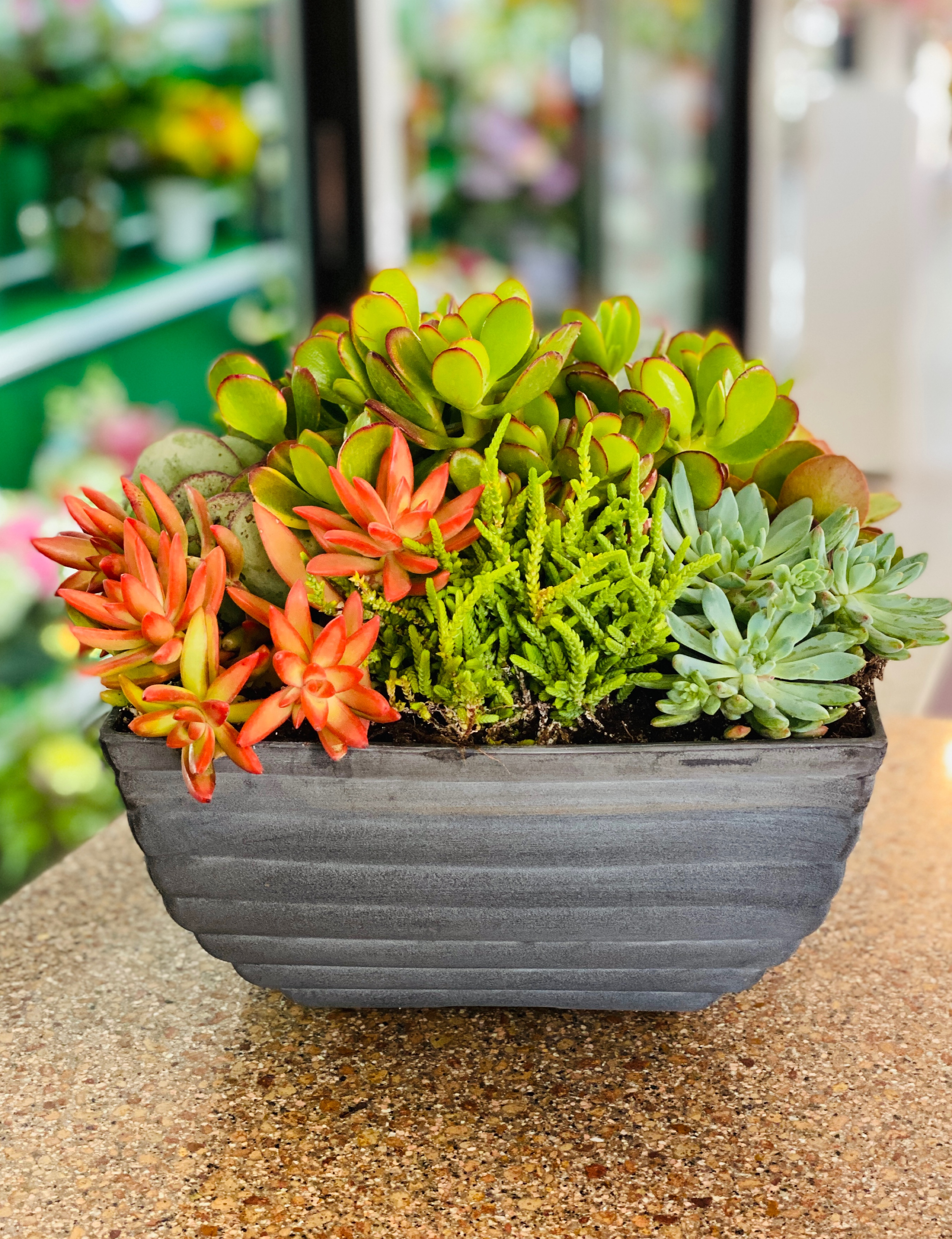 Summer Succulent Bowl