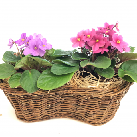 Double Violet Basket