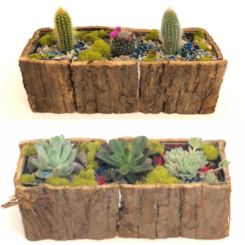 Cactus or Succulent Woodsy Garden