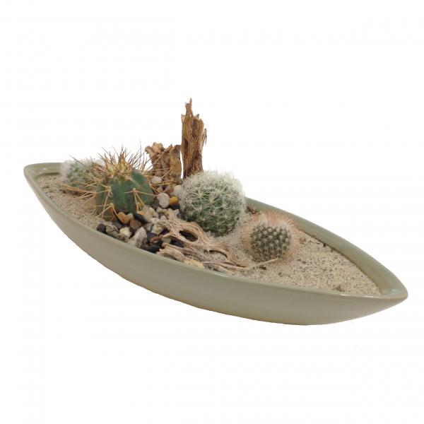 Cactus or Succulent Garden
