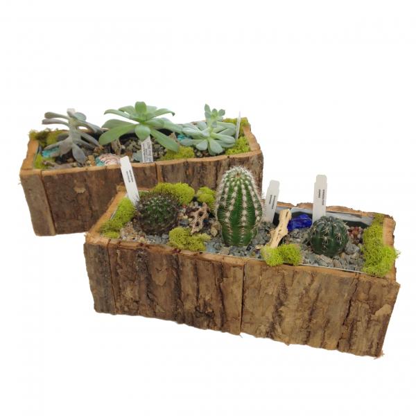 Woodsy Cactus or Succulent Garden