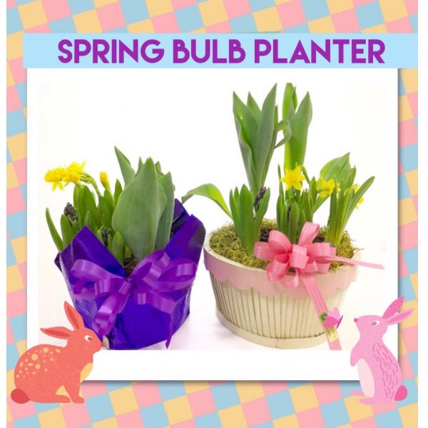 Spring Bulb Planter