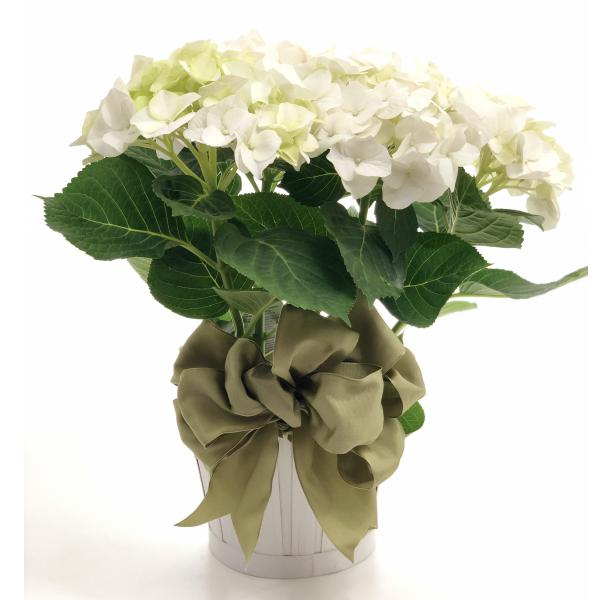 The White Hydrangea Planter