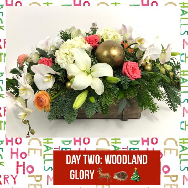 Woodland Glory