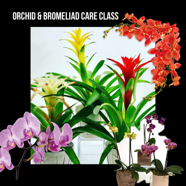 Orchid and Bromeliad Care DIY Class