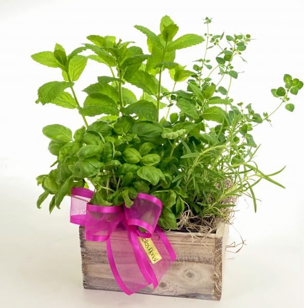 Herbivore Garden Box