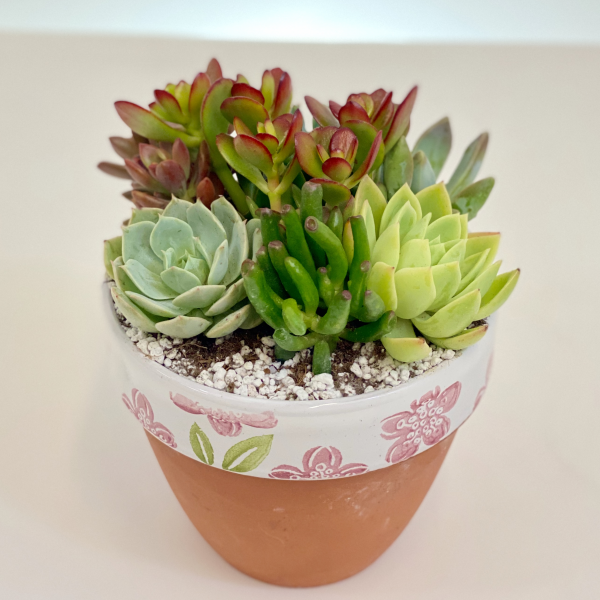 Sweet Succulent Pot