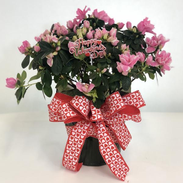 Valentine's Azalea Delight