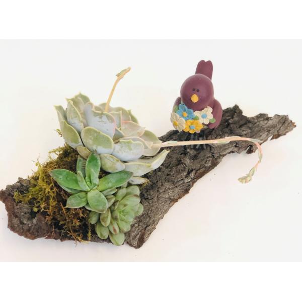 Succulent Wild
