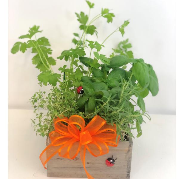 Four Count Herb Garden