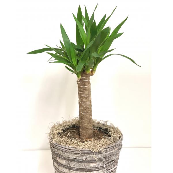 Yucca Pant
