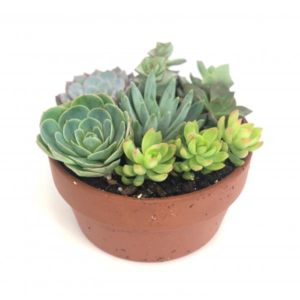 Succulent Garden Ceramic