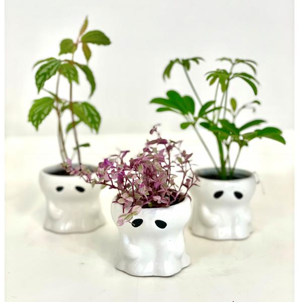 Halloween Plant Trio