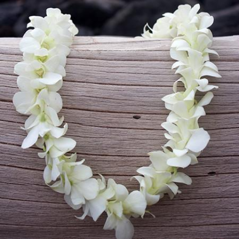 Classic Single White Orchid Lei