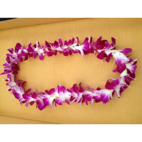 Single Purple & White Orchid Lei