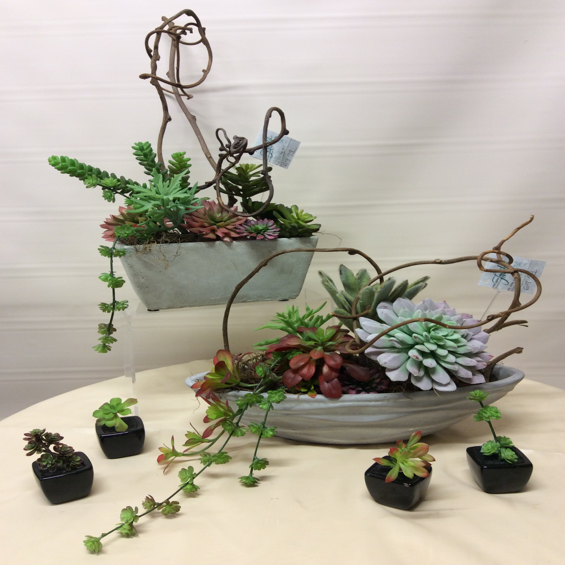 Succulents In White Container