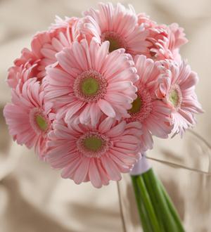 The Daisy Delight Bouquet