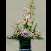Cymbidium & Dendrobium Orchids