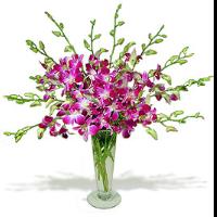 Dendrobium Orchids In Slender Vase