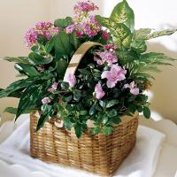 Dishgarden w/ Flowers