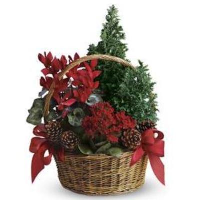 Blooming Christmas Garden
