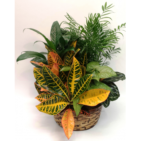 KD-PL15 Large Basket Planter