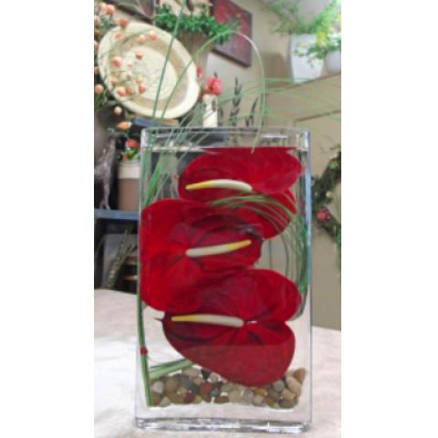 Antherium Aquarium 3