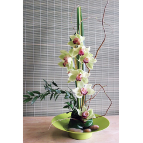 Uptown Blossoms Cymbidium