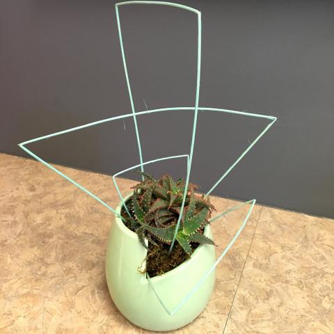 Funky succulent