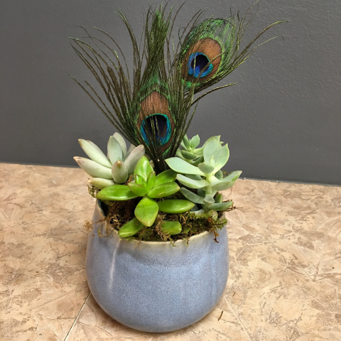 Peacock feathers and succulents